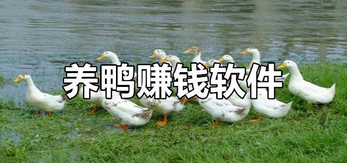 养鸭赚钱软件