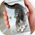 可愛貓動態屏幕安卓版